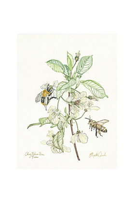 Cherry Blossom Bees | Signed Limited Edition Print 40x50